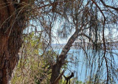 Julie Moore Cornelian Bay