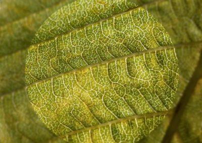 Anne Dean - texture