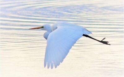 November 2020 – Birds in flight theme