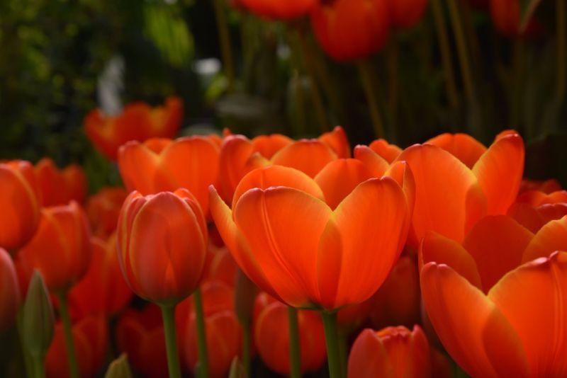 Spring in the Botanical Gardens